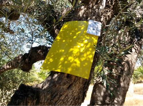 ECONEX YELLOW CHROMATIC placed in an olive tree